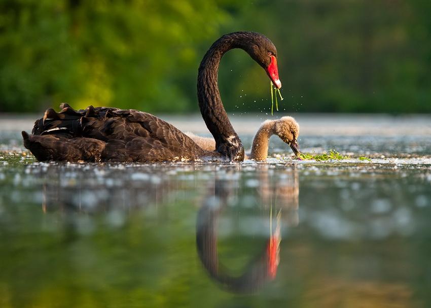 Чешский фотограф Роберт Адамек (Robert Adamec) снимает впечатляющие фотографии различных животных и