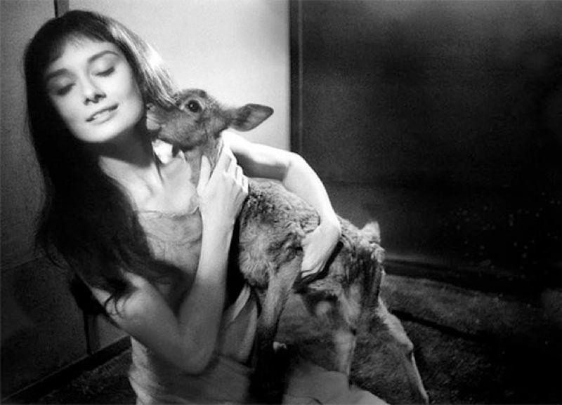 13. Двое симпатяг: Одри и Пиппин, ее ручной олень.