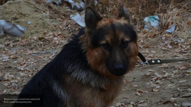 ВЛенобласти собачка едва незагрызла 11-летнего ребенка