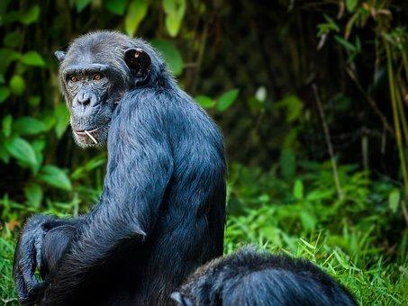 Приматы узнают больных сородичей позапаху фекалий— Ученые