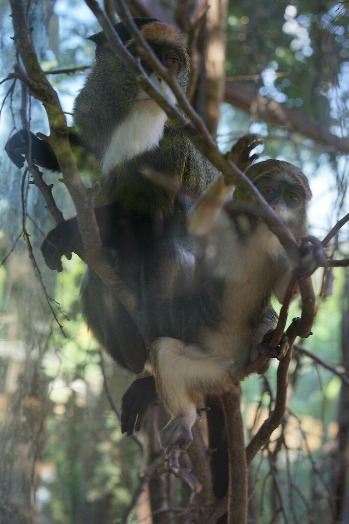 Обезьяны в зоопарке. Сафари-парк, Геленджик.