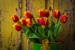 green-bucket-of-tulips-garry-gay.jpg