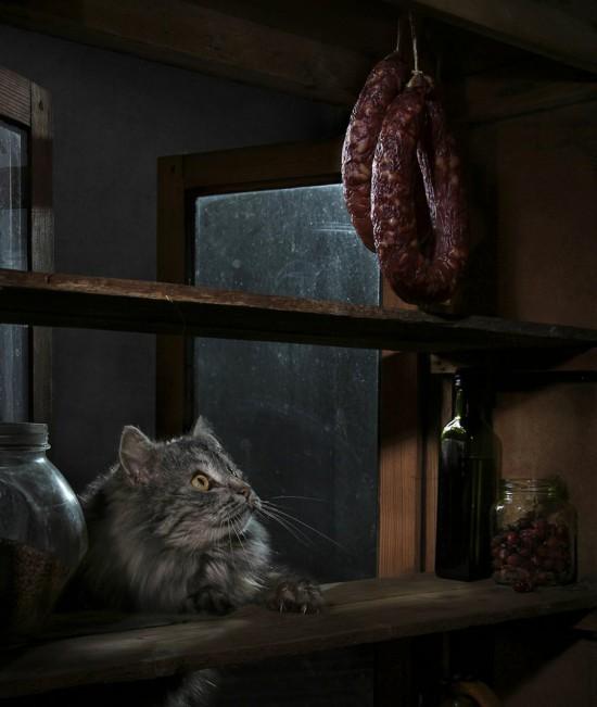 кошки-кошки-света павловская-2.jpg