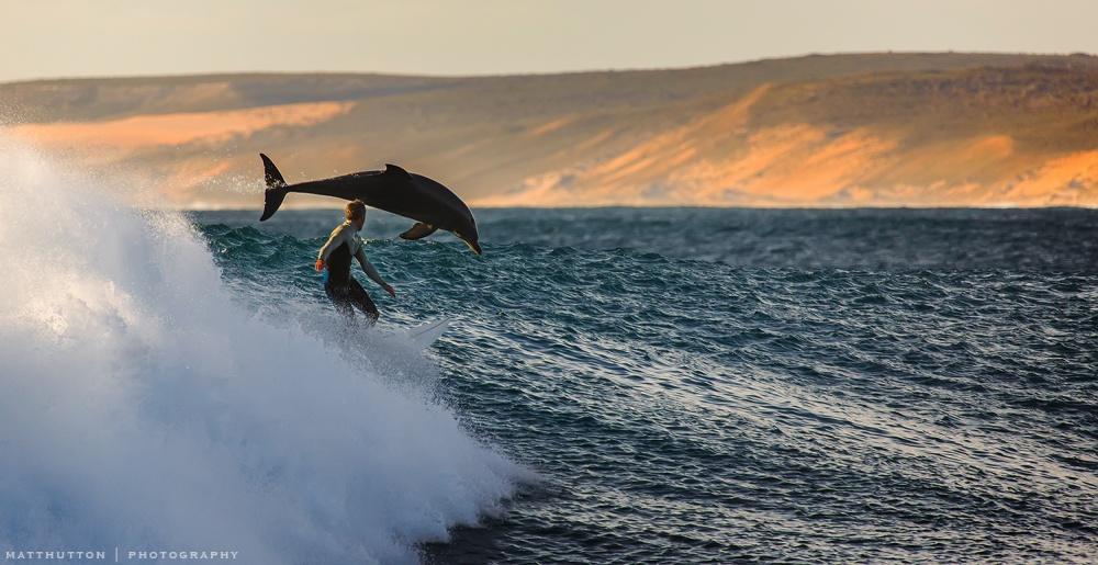 Серфингист идельфин.