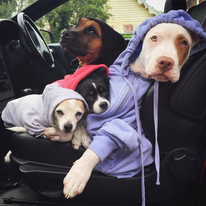 Кстати, у собак-спасателей уже большой опыт по части опекунства. Но «желтые комочки» стали их фавори