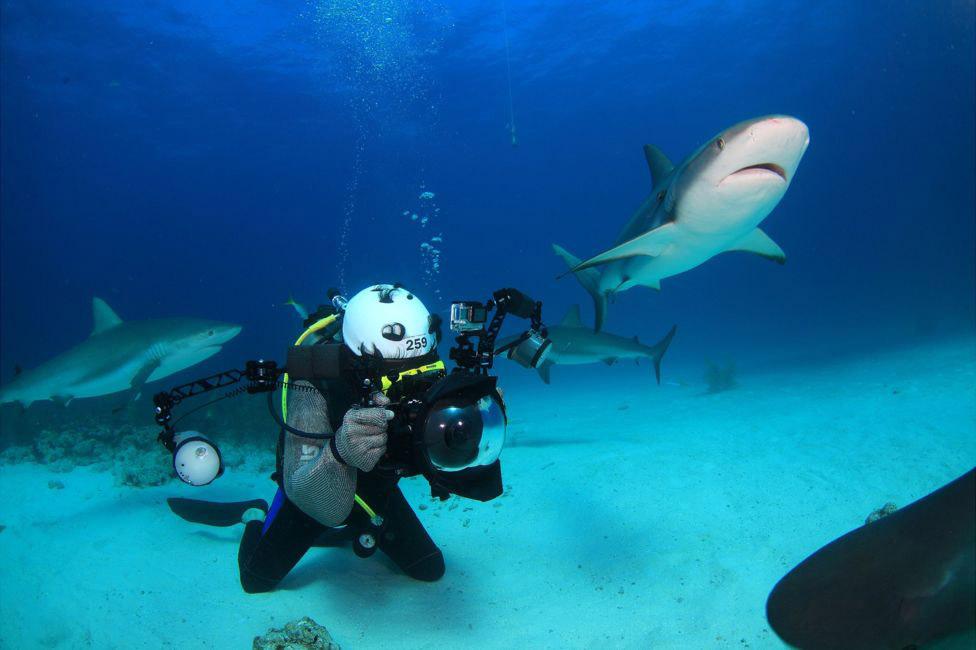 4. Акулы очень редко нападают на людей, тем более едят их. По мнению этих рыб, люди «невкусные»