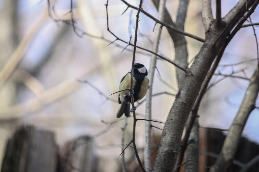 Птицы-33.jpg