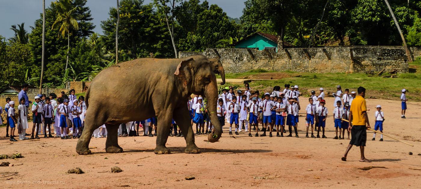 Фотография 6. Школьники и слоны в приюте Pinnawala Elaphant Orphanage в деревне Пиннавела. Куда поехать на экскурсию в Шри-Ланке.