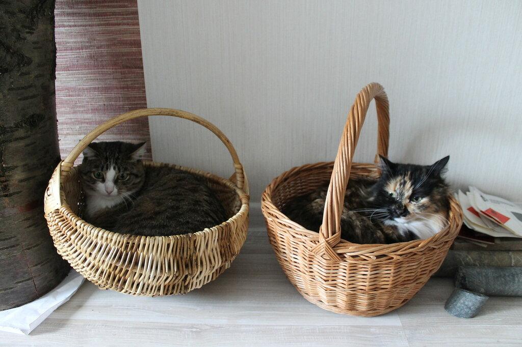 Муся и Киша в корзинках.