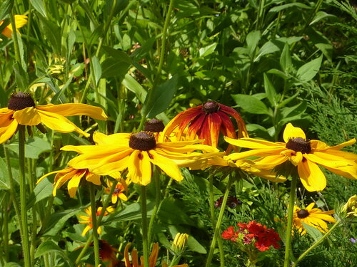 Цветут красотки как создания любви, гармонии, весны, они врачуют мироздание, они поэзией полны!