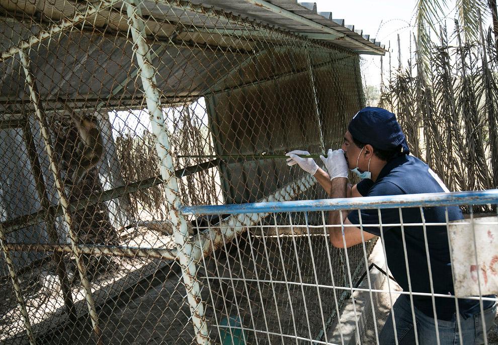 6. Обследование обезьяны. (Фото Ibraheem Abu Mustafa | Reuters):