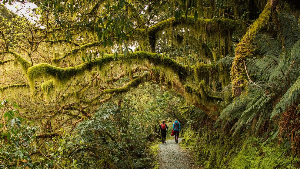8. Это он! Из представителей фауны Новой Зеландии наиболее известными являются птицы киви, ставшие н
