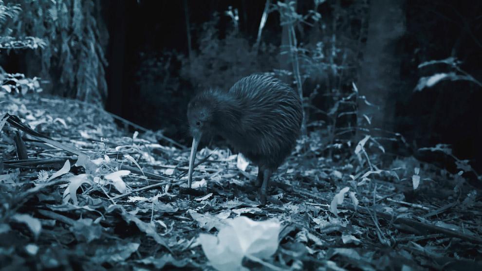 9. Новая Зеландия расположена на двух крупных островах (Северный и Южный) и большом количестве (приб