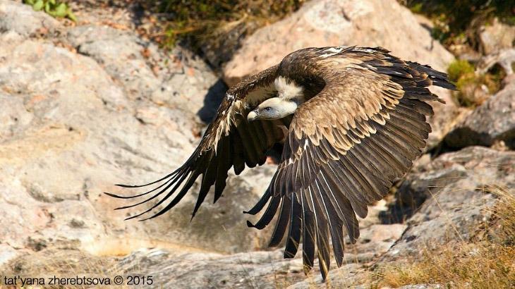 Фотографии и текст Crimea Wild-Life Photo   1.