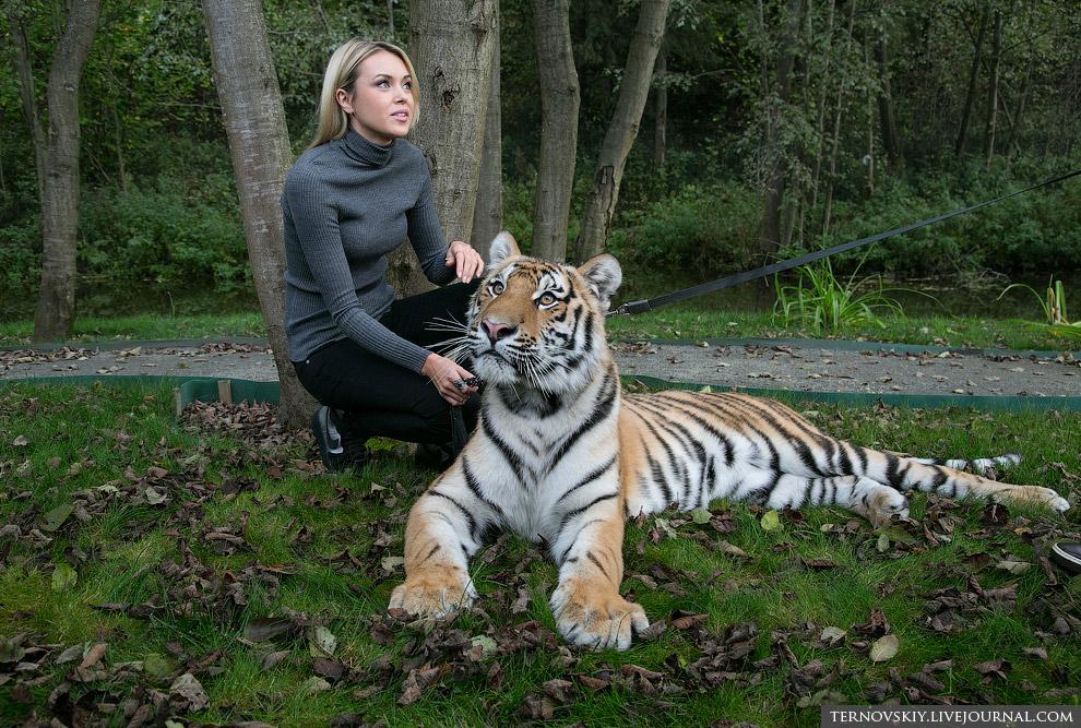 21. Интересно, как сложится дальнейшая судьба тигренка Мир, поможет ли ему Путин, и где он в ит