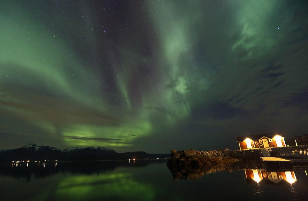 4. Бакланы. Норвегия, 30 сентября 2014.