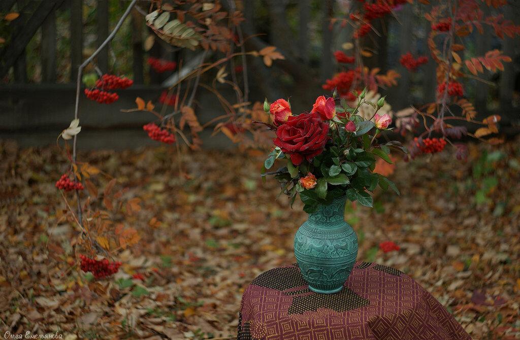 Последние розы