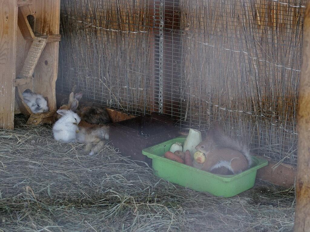 Кролики и белка в зоопарке. Сафари-парк, Геленджик.