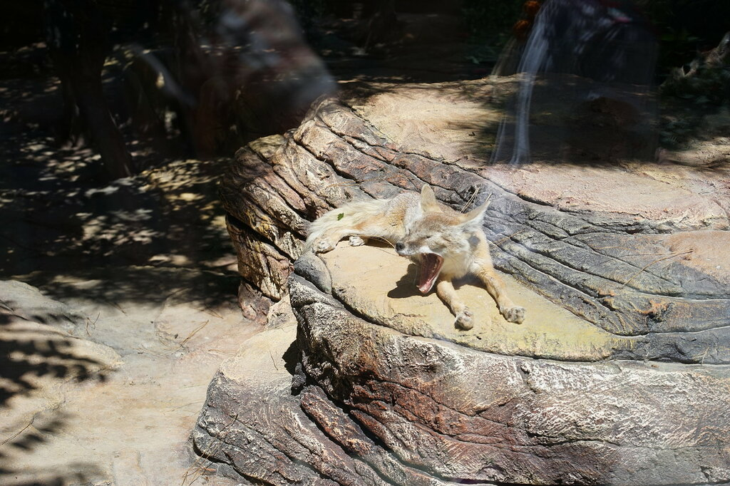 Животные в зоопарке. Сафари-парк, Геленджик.