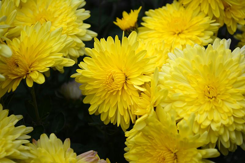 цветы дождливый день 3.jpg