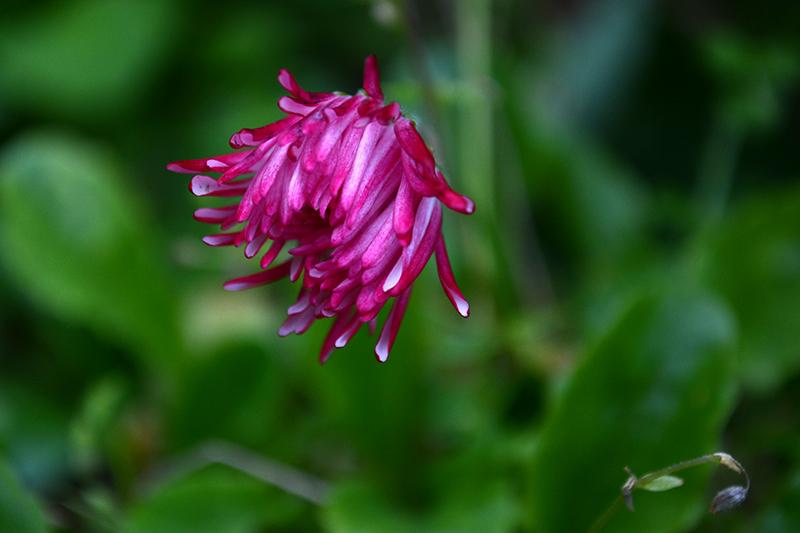 цветы дождливый день 7.jpg