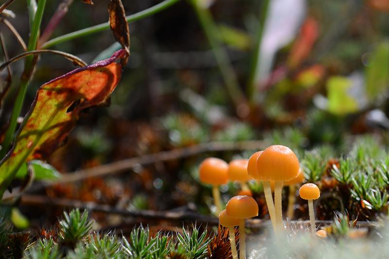 рыжий лес 2.jpg