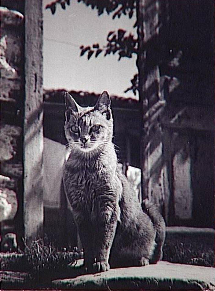 1953. Афинский кот