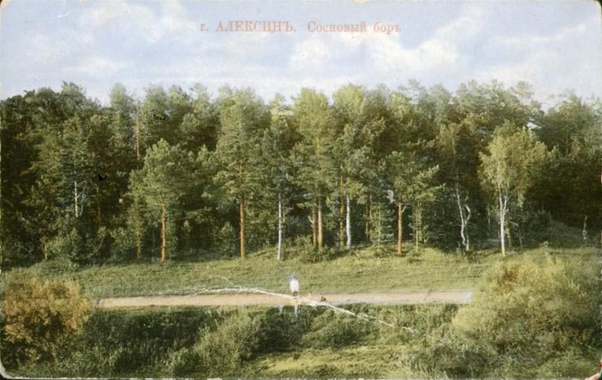 Окрестности Алексина. Сосновый бор