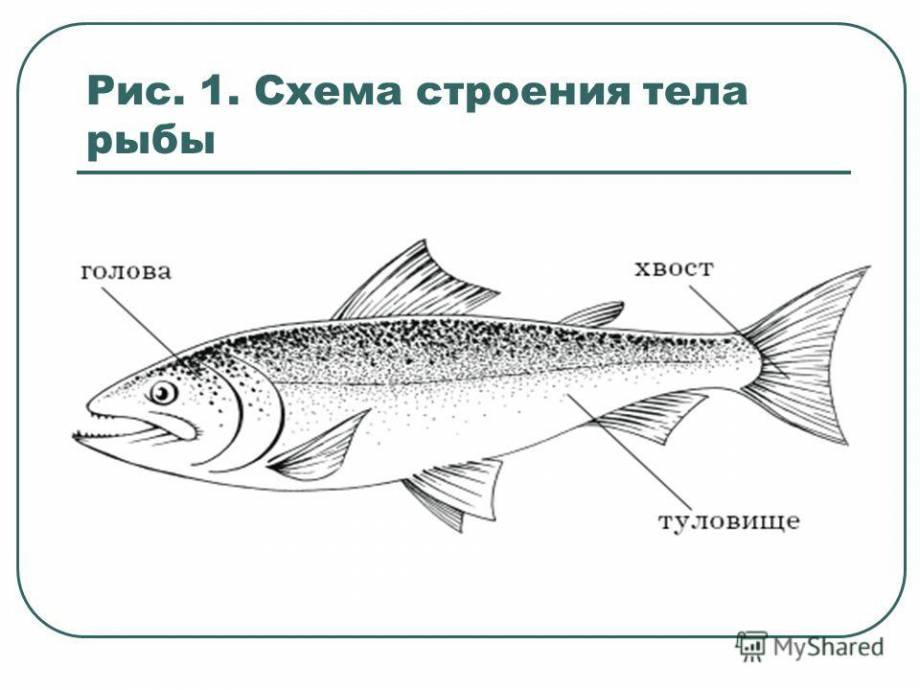 """""""Задерживается мелкая рыба, а крупная рыба потирает руки"""", - Березюк о задержании Каськива"""