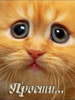 Прости! Грустный рыжий котенок открытки фото рисунки картинки поздравления