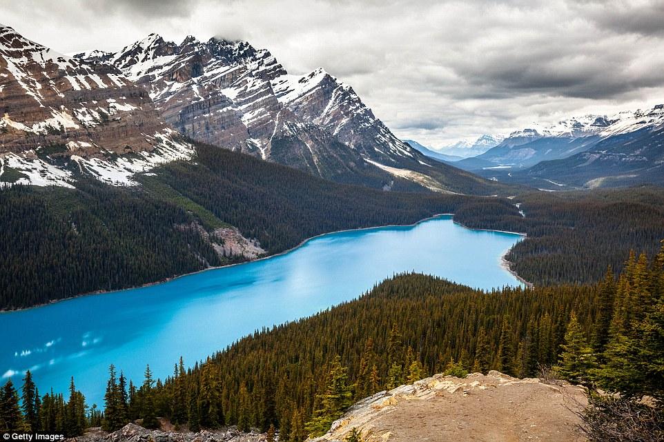 Неправдоподобно голубые воды озера Пейто в национальном парке Банф в Канаде.