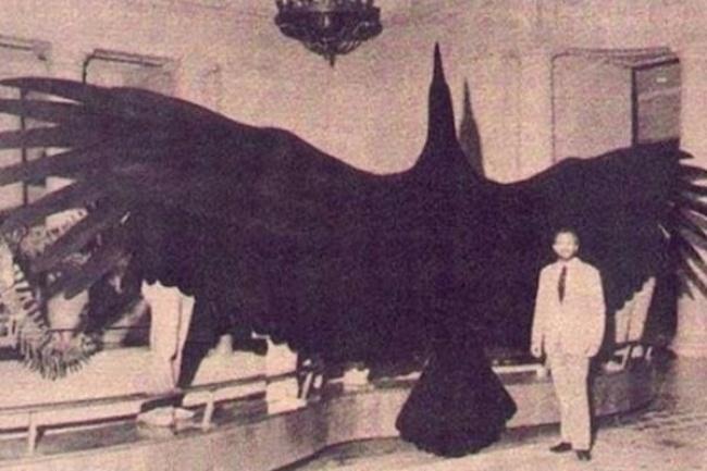 Аргентавис — вероятно, самая крупная птица, когда-либо жившая на Земле. Ее вес достигал 79 кг, а раз