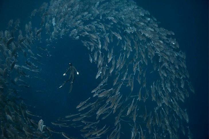7. С косяком рыб. 8. C акулой у Азорских островов.