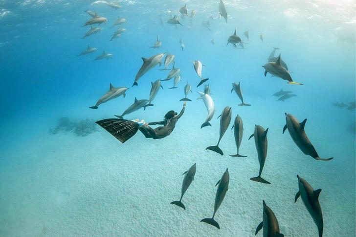 10. С дельфинами в Красном море.