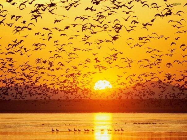 Ученые поведали, почему птицы никогда несталкиваются друг сдругом
