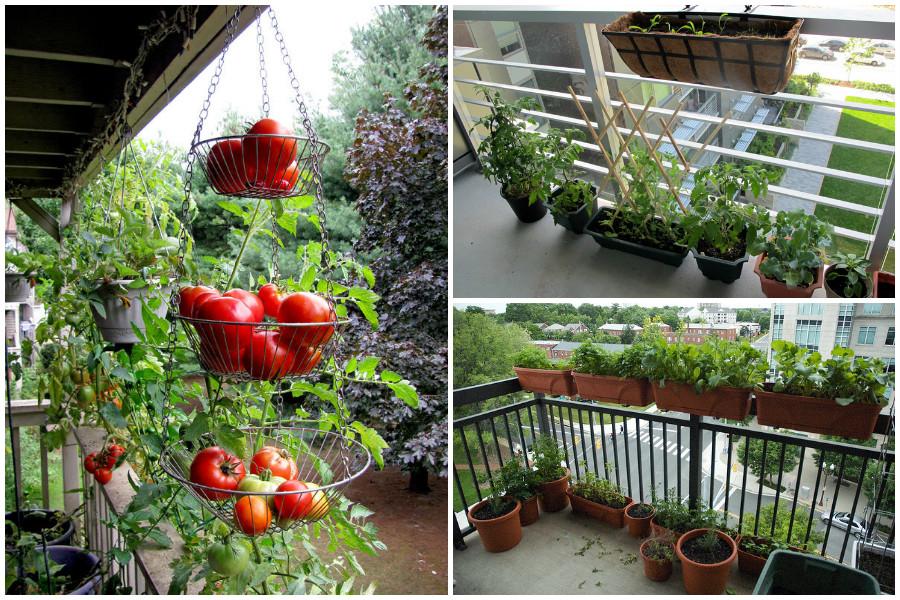 Овощи на балконе своими руками 284