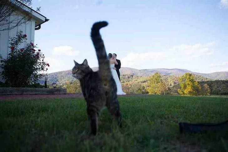 7. Когда кошка пытается привлечь внимание.