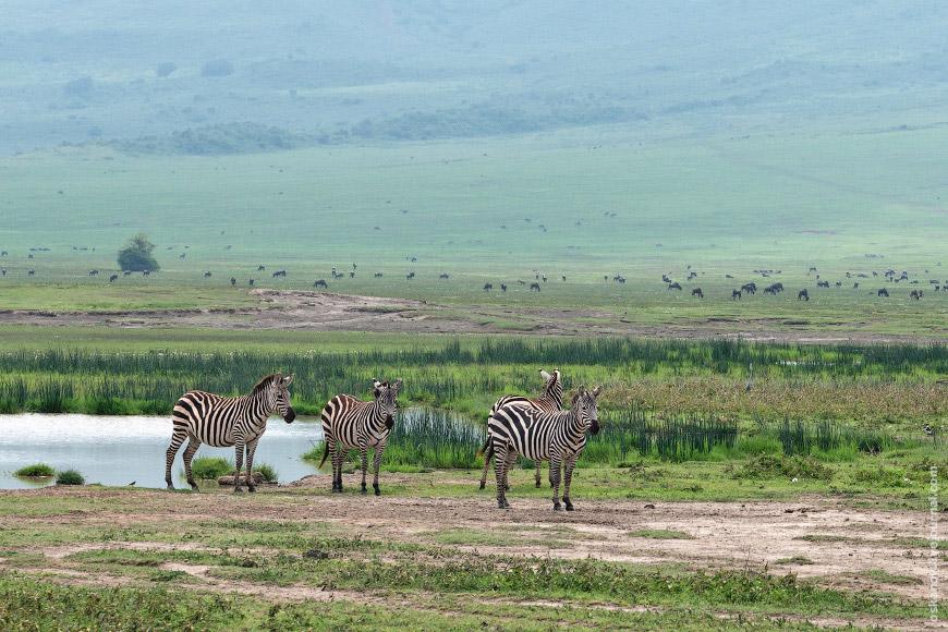 18. Ну, как же очерк об Африке без слона?