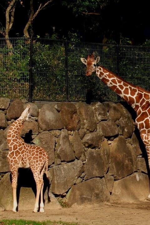 8. Зоопарк Йокогамы Зоопарк Йокогама самый известный в Японии. На его территории не только содержатс
