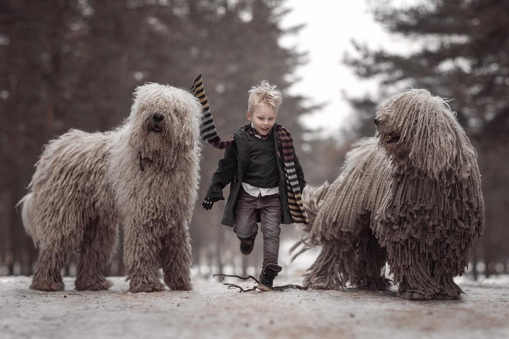 Когда твоя собака— лохматое чудо-юдо