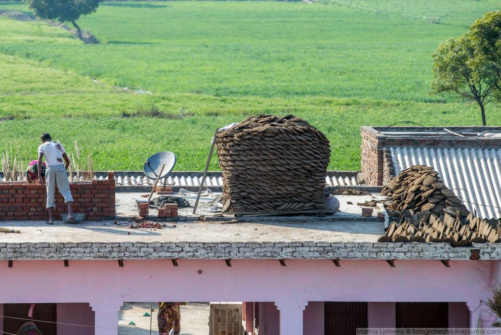 23. В Индии уже наладили продажу высушенных коровьих лепешек через онлайн-магазины. Они очень б
