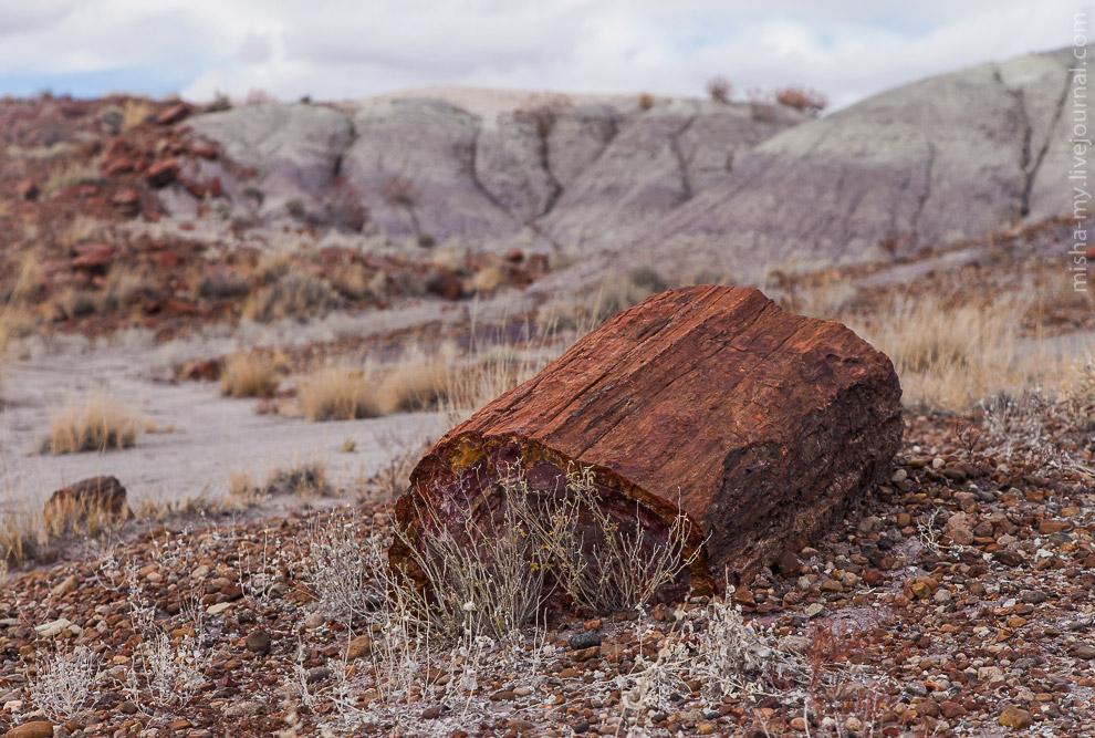 7. Деревья очень твердые, но ломкие. Ствол очень часто сохраняет свою форму, лишь разваливаясь