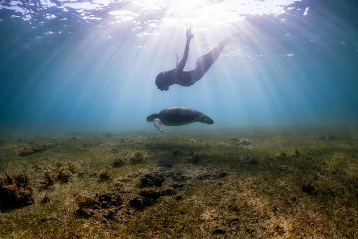 9. С черепахой на дне у побережья острова Майотта.