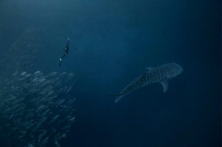 11. С косяком рыб и акулой.