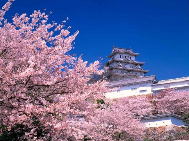 © seejapan.co.uk  Когда вбольшинстве стран дети заканчивают учебу, японцы отмечают свое 1сен