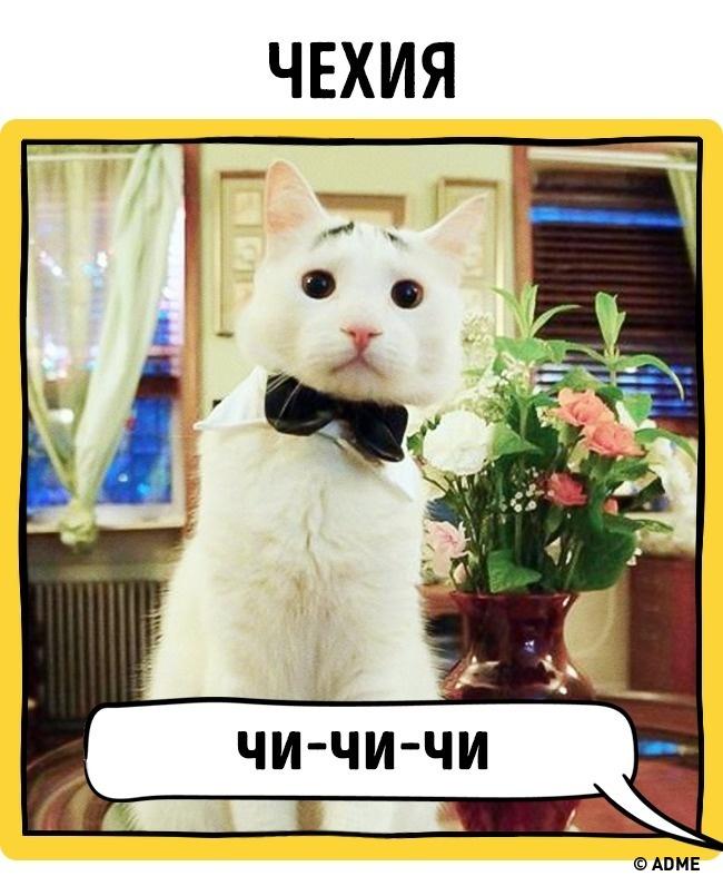 Как вразных странах подзывают кошек