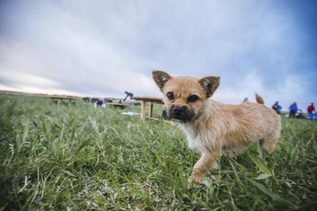 © 4DESERTS.COM / OMNI CAI  Наследующий, 3-й день гонки пес присоединился кспортсмену ивмест