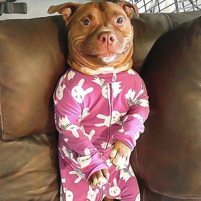 © mymodernmet  Дома выяснилось, что пес очень любит фотографироваться. Девушка судовольствием