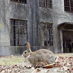 okunoshima-rabbit-island-japan-9.jpg