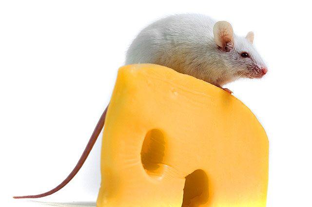 Пофакту недобросовестной конкуренции Татарстанское УФАС завело «сырное дело»